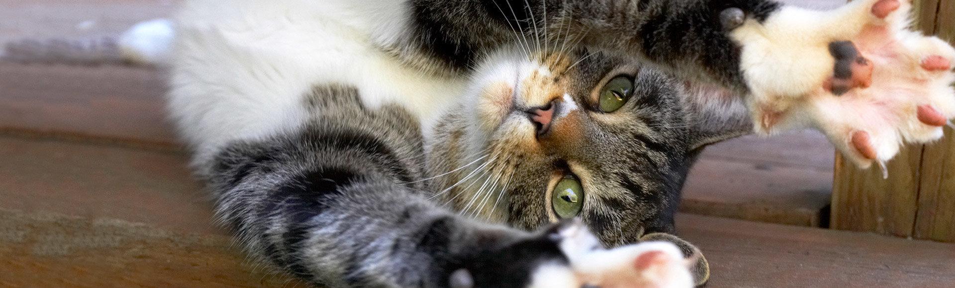 Kedileri Tanıyalım