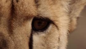 VAHŞİ AFRİKA: YAŞAM IRMAKLARI - 1. Sezon 6. Bölüm