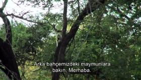 Afrika'da maymunlar tarafından soyulduk