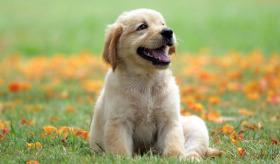 Köpekler hakkında şaşırtan bilgiler