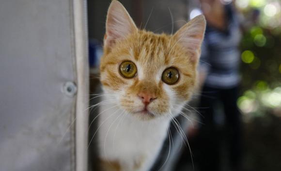 Kedileri ne kadar iyi tanıyorsun?